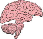 brain-2842186_1280